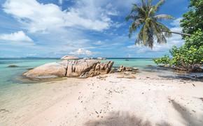 Картинка море, пляж, природа, тропики, пальмы, побережье, Natur, Meer, Palmen, Küste, Strand, Tropen
