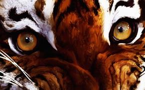 Обои глаза, взгляд, Digital Art, year of the tiger, axlsalles