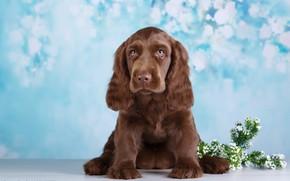 Картинка цветы, фон, собака, боке