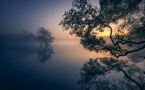 Картинка деревья, туман, озеро, парк, отражение, рассвет, Англия, Лондон, утро, London, England, Richmond Park, Ричмонд-парк, Пен …