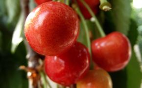 Картинка природа, фрукт, черешня