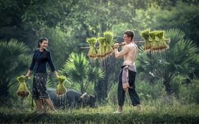 Картинка girl, love, man, china, asian, valentine, countryside, happiness, chinese, oriental, asiatic, buffalo, horn, rice planting