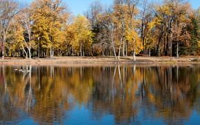 Картинка осень, деревья, озеро, пруд, парк