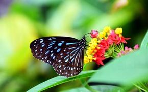 Обои листья, бабочка, цветок