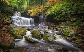 Картинка осень, лес, листья, деревья, река, камни, водопад, Пенсильвания, каскад, Pennsylvania, Ricketts Glen State Park, R.B. …