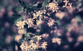 Картинка цветок, цветение, парк в Строгине