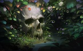 Картинка заросли, череп, зубы, джунгли, челюсть, человеческий