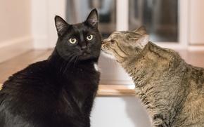 Картинка взгляд, коты, дружба