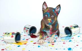 Картинка краски, щенок, кисти