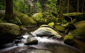 Картинка река, камни, лес