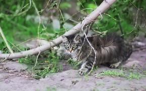 Картинка кот, фон, дерево, котейка