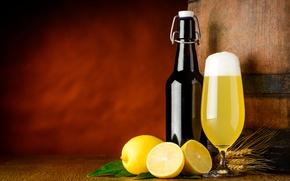 Картинка бокал, бутылка, пиво, желтые, колоски, сок, фрукты, бочка, цитрусы, лимоны