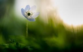 Картинка цветок, природа, фон