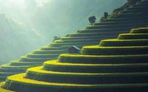 Картинка Азия, домик, терраса, рисовые поля