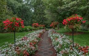 Картинка красота, парк, пейзаж, природа
