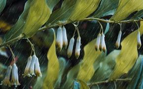 Картинка листья, капли, макро, ветка, жождь