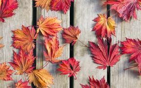 Обои осень, листья, фон, древесина