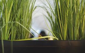 Картинка трава, листья, растение, зеленая