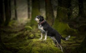 Картинка лес, поза, друг, собака
