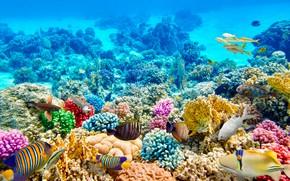 Картинка рыбы, синева, дно, кораллы, подводный мир