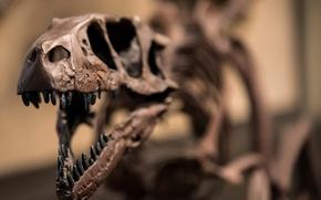 Картинка скелет, raptor, dinosaur, Jurassic