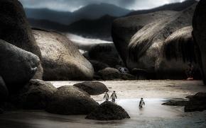 Картинка природа, фон, пингвины