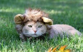 Обои трава, кот, взгляд, шапочка