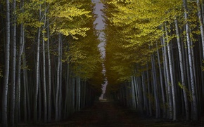 Картинка лес, свет, ночь, Орегон, США, днревья, Boardman Tree Farm, Бордман