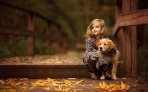 Картинка девочка, мост, щенок, ретривер, осень, листья
