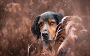 Обои природа, взгляд, собака