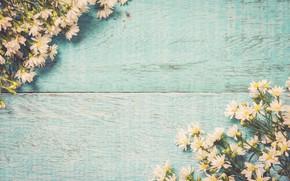 Картинка цветы, весна, white, белые, wood, blossom, flowers, romantic, spring, tender