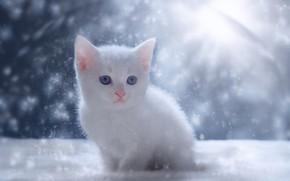 Картинка снег, котенок, малыш, белый котёнок