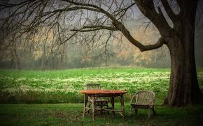 Картинка лето, стол, дерево, стул