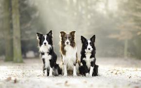 Обои собаки, природа, фон
