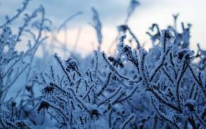 Картинка зима, иней, небо, снег, природа, красота, мороз, прогулка, январь