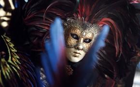Картинка взгляд, перья, маска, карнавал