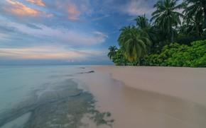 Картинка море, пляж, лето, пейзаж, тропики, пальмы, голубая вода