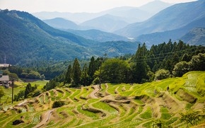 Картинка лес, лето, солнце, деревья, горы, Япония, плантации, Kiwa, Kumano, Mie