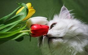 Картинка белый, кот, цветы, Пушистый