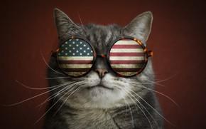 Обои усы, очки, прикол, флаг, кот