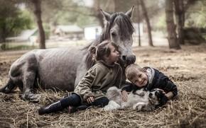 Картинка конь, собака, мальчик, девочка