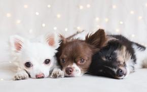 Обои собаки, дом, уют