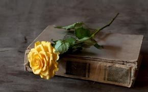Картинка роза, книга, желтая