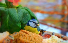 Картинка Птичка, Bird, Зелёные листья, Green leaves