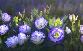 Картинка цветы, красивые, by duongquocdinh