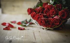 Картинка цветы, доски, розы, лепестки, корзинка