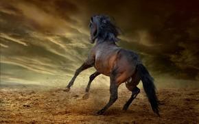 Картинка гроза, небо, облака, тучи, поза, темнота, конь, земля, прыжок, лошадь, жеребец, пыль, хвост, копыта, гнедой, …