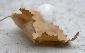 Картинка осень, макро, лист, шар, день, воздушный шарик, лист дерева