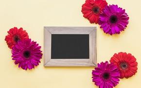 Картинка цветы, весна, рамка, colorful, хризантемы, wood, flowers, spring, bright