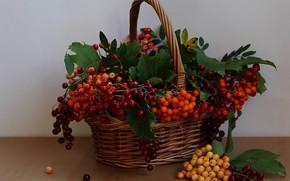 Картинка лето, ягоды, корзина, натюрморт, рябина, калина, ягоды волчьи